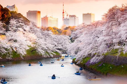 Kitanomaru park in Tokyo during Cherry Blossom season