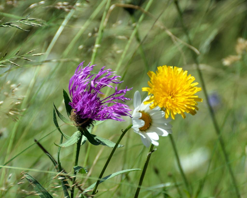 Fiori nel vento - Flowers in the wind