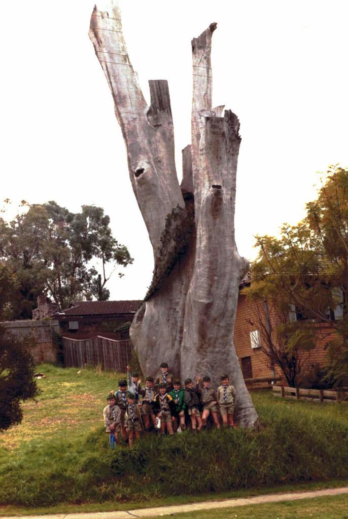 Toongabbie Convict Farm - big tree 1983
