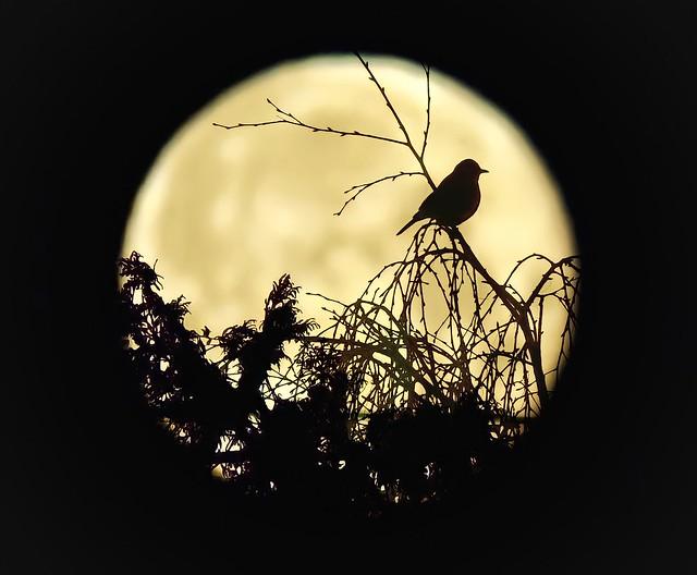 Midnight sentry