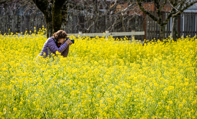 Mustard Season in Sonoma Valley