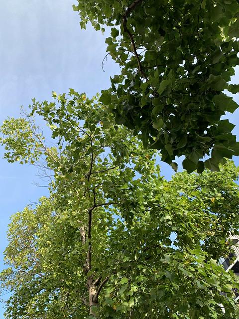 2021: Sydney Trees