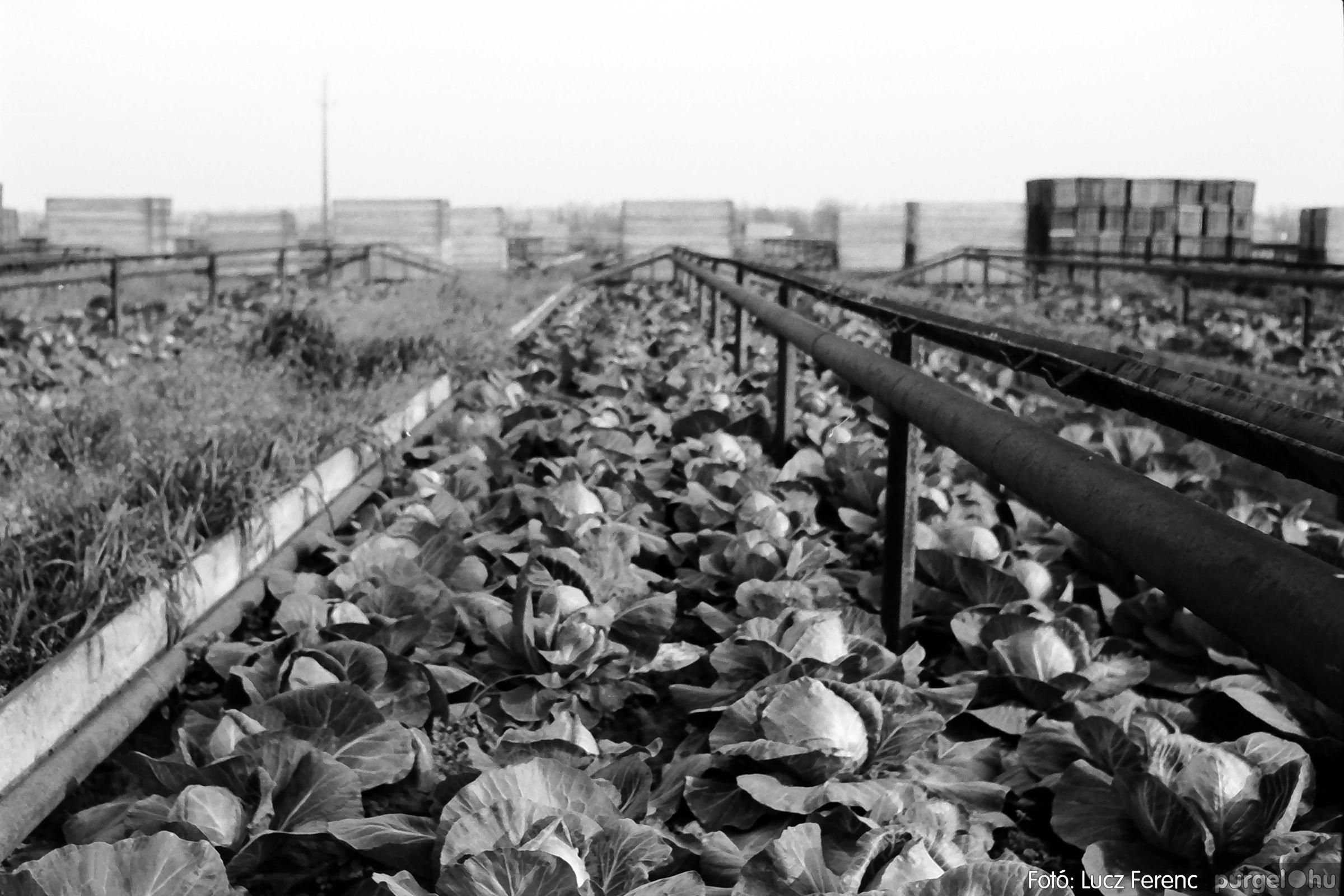 044. 1976. Élet a kertészetben 008. - Fotó: Lucz Ferenc.jpg