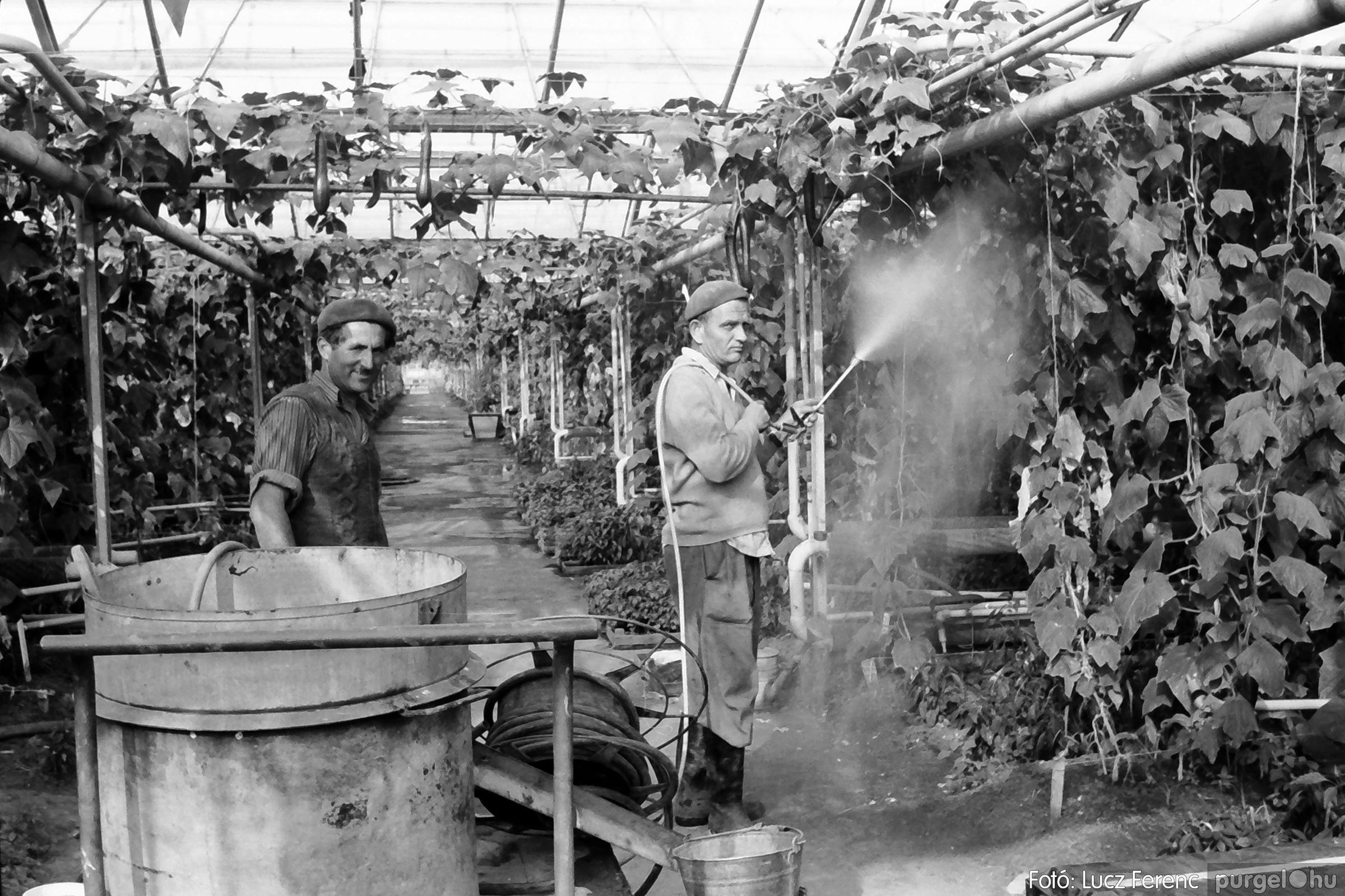 044. 1976. Élet a kertészetben 006. - Fotó: Lucz Ferenc.jpg
