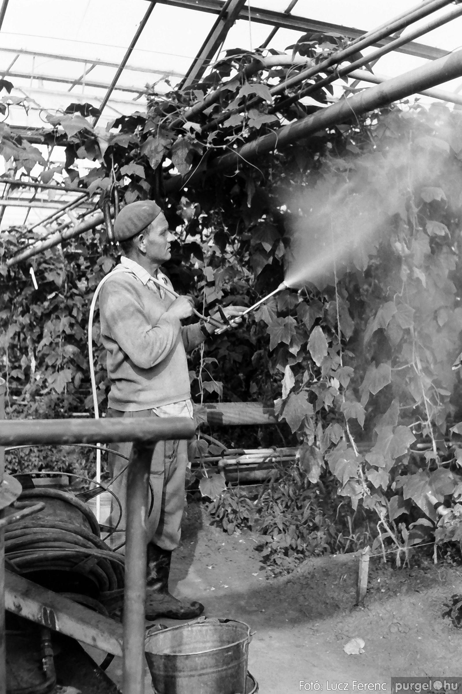 044. 1976. Élet a kertészetben 005. - Fotó: Lucz Ferenc.jpg
