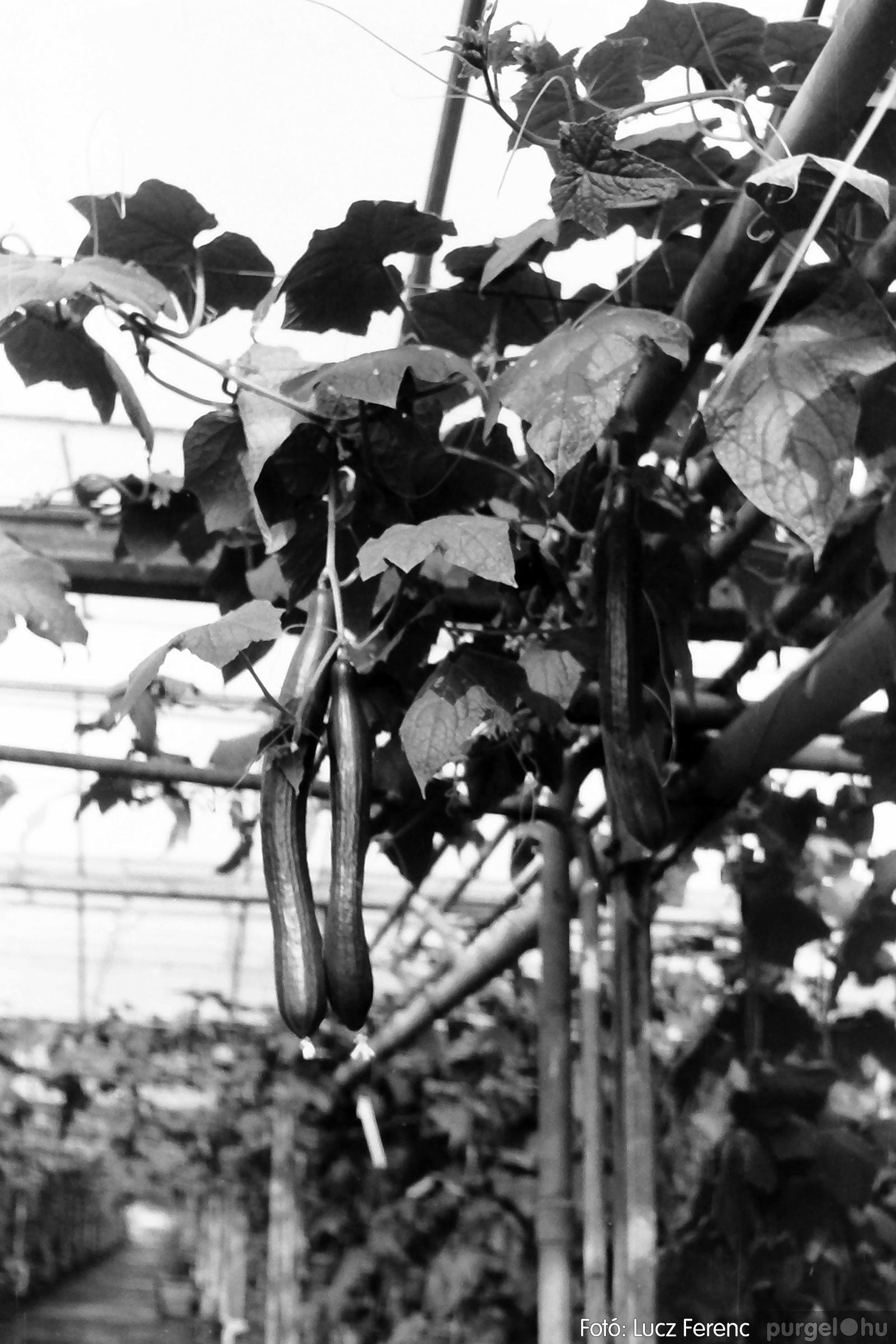 044. 1976. Élet a kertészetben 004. - Fotó: Lucz Ferenc.jpg