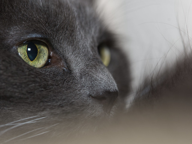 Peepers amid the fluff -[ Happy Caturday | Eyes of March ]-