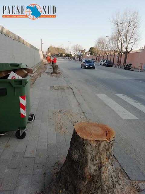 Alberi Salerno - PaeseSud