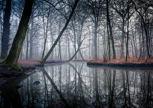 Morning fog in a woodland