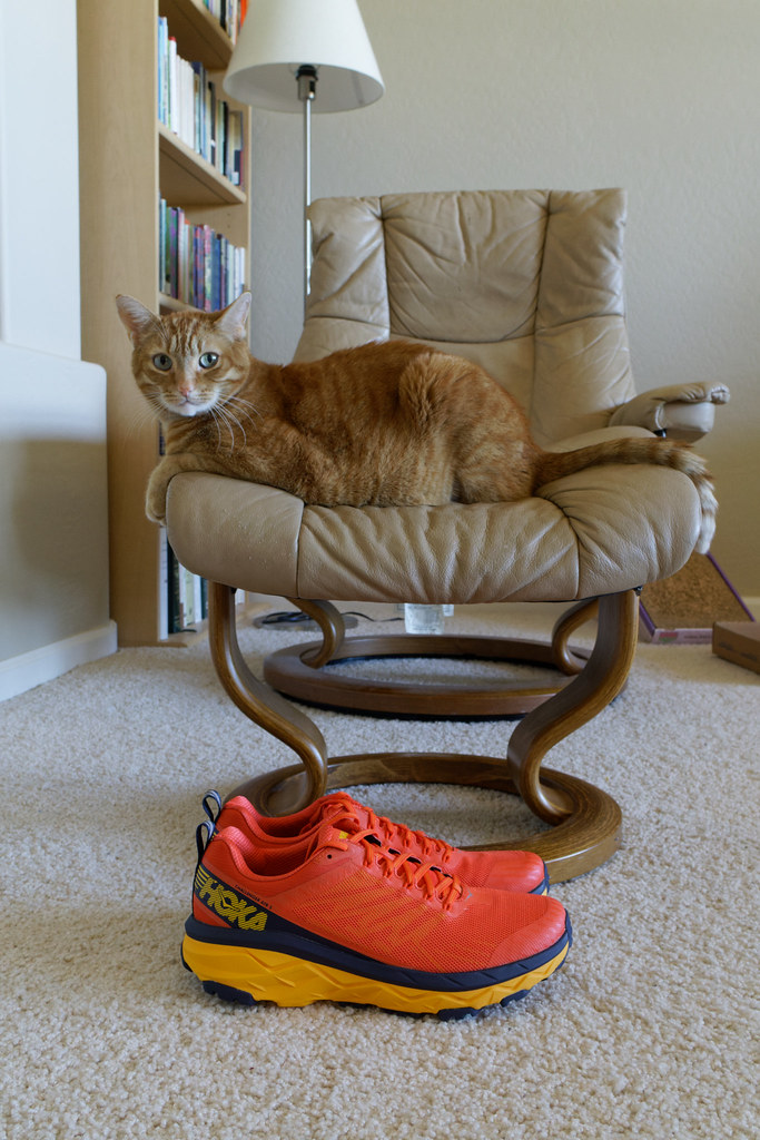 A pair of orange Hoka One One Challenger ATR 5 trail running shoes sit below our orane tabby cat Sam on February 21, 2021. Original: _RAC3913.arw