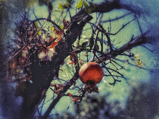 An abandoned garden's memory (explored)