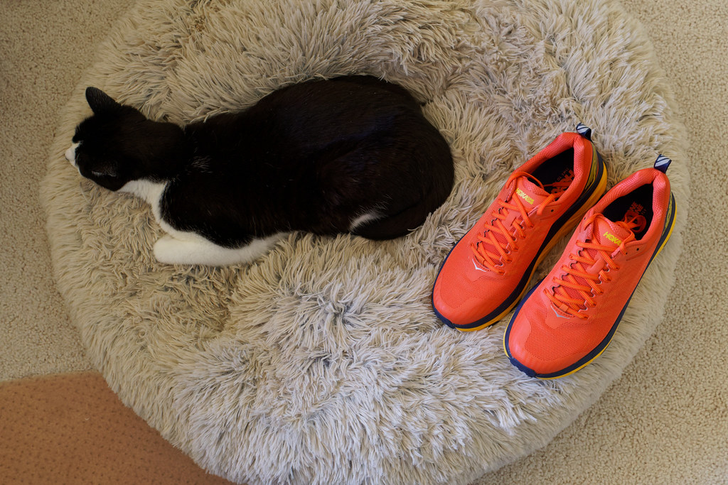 A pair of orange Hoka One One Challenger ATR 5 trail running shoes sit beside our sleeping cat Boo on February 21, 2021. Original: _RAC3824.arw