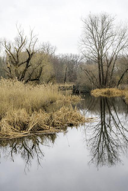 Beaver Swamp Brook