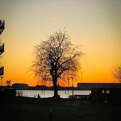 #morning #chilly #sunrise #running