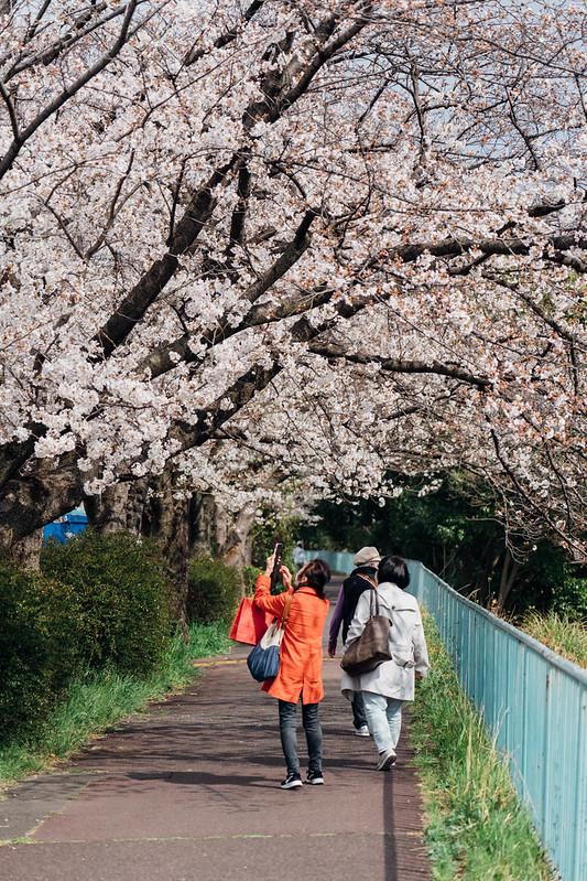 Sakura_20210327 (5)