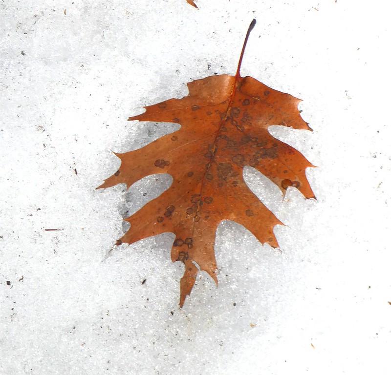Death of Autumn