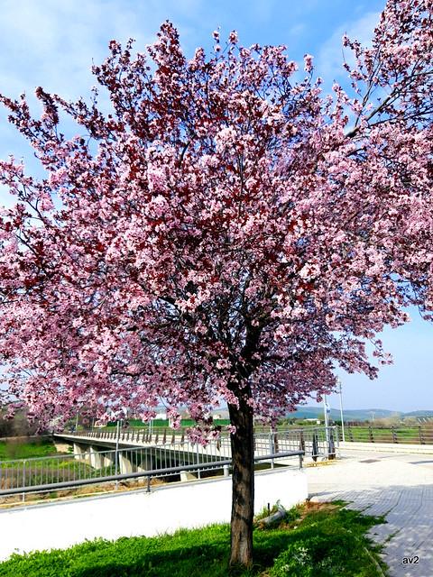 Esto es ya primavera.
