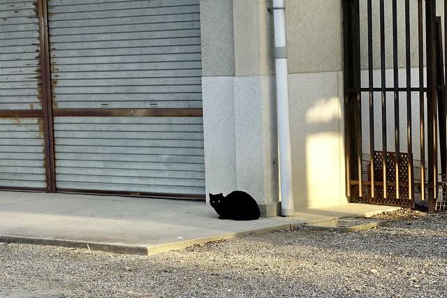 Today's Cat@2021−03−27