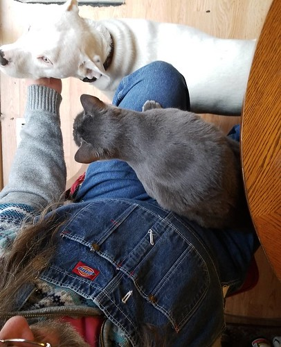 Sigh.... #Rosa #catsofinstagram #graycat #Carla #dogsofinstagram #pitbullsofinstagram #pitbullmix #pittie #staffordshirebullterrier #staffiesofinstagram #overalls #dungarees #biboveralls #vintage #dickiesworkwear #dickiesoveralls #denimoveralls #overallsa