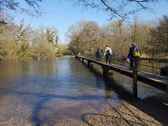 The Frome at Moreton - March 1st