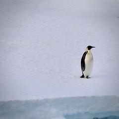 Day 38: Penguin day!