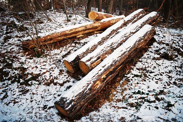 winter lumber at sunset
