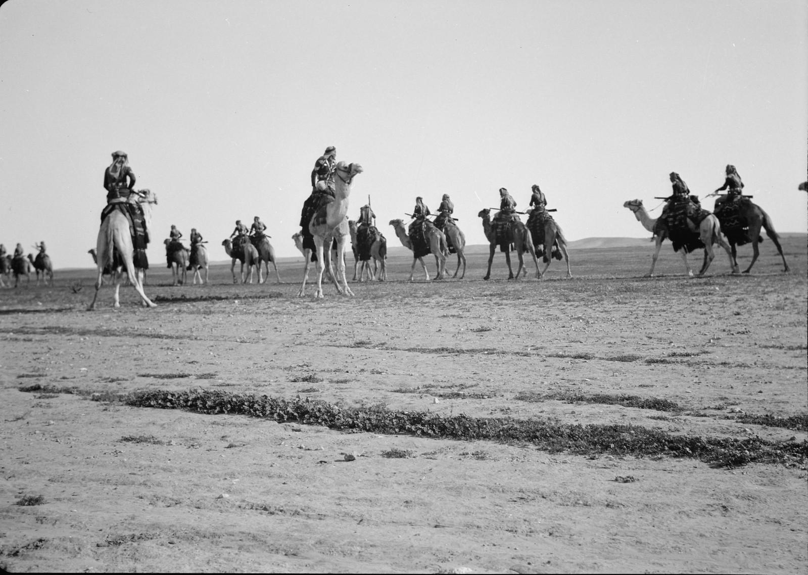 14. Верблюды маневрируют на поле.
