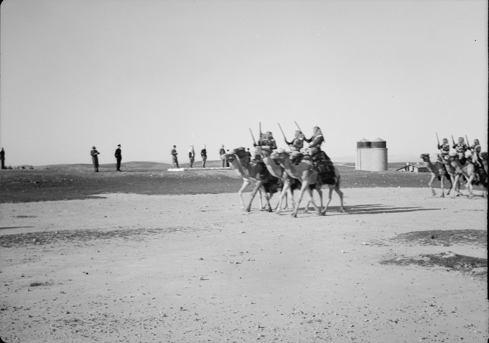 12. Верблюды пробегают мимо смотровой площадки