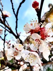 Spring has sprung (again)