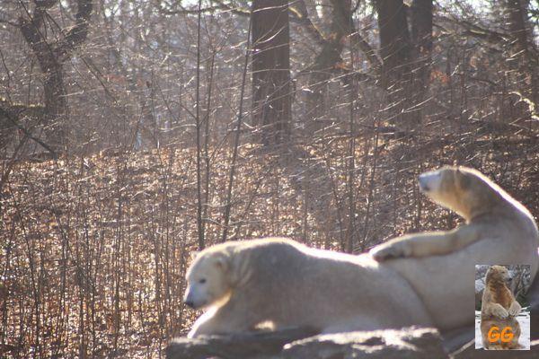 Besuch Zoo Berlin 21.02.21048