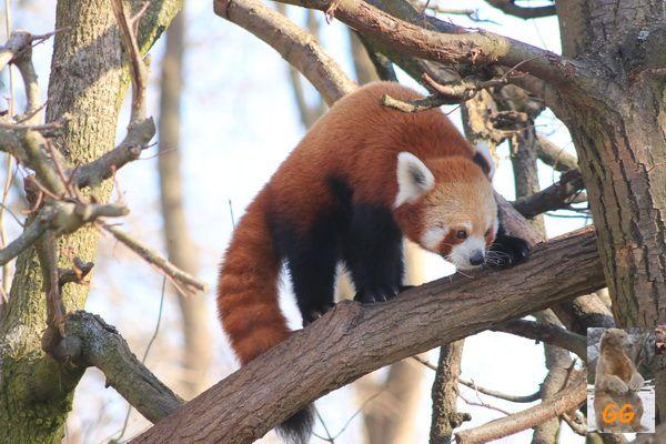 Besuch Zoo Berlin 21.02.21041