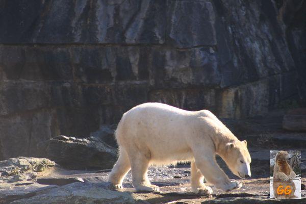 Besuch Zoo Berlin 21.02.21035