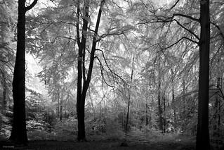 Landscape Schleswig-Holstein, Germany