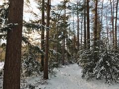 winter forest u2744ufe0f