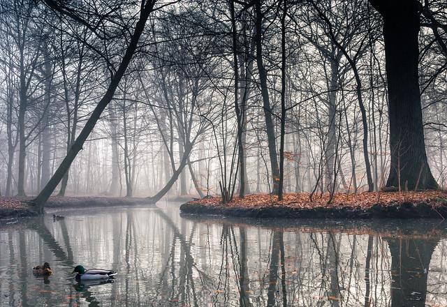 Foggy woodlands II