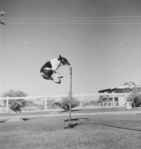 jump leap dogs sprinklers camphillqld