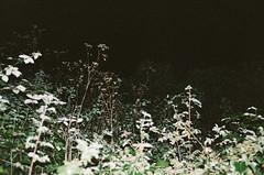 plants at night