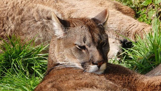 9484 - Puma