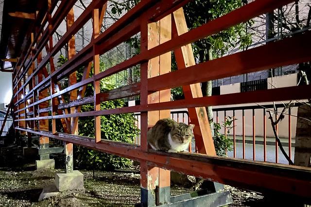 Today's Cat@2021−03−06
