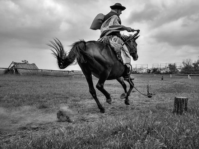 Reiter in der Puszta