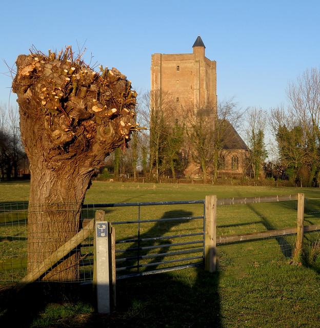Stompe boom en toren | Stubby tree and tower