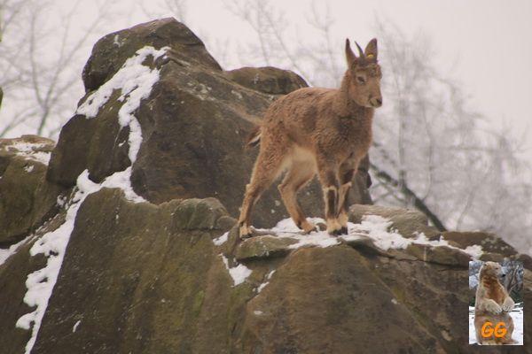 Besuch Zoo Berlin 21.02.21056