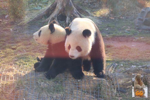 Besuch Zoo Berlin 21.02.21009