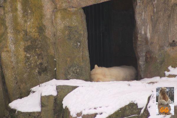 Besuch Zoo Berlin 21.02.21062