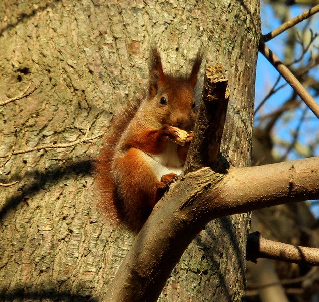 Squirrel enjoying the sun