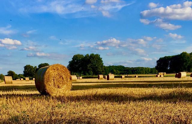 Farmland tranquility