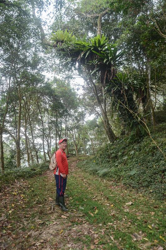 白石牙山產道山蘇森林