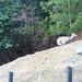京都産業大学・鹿 P2070373