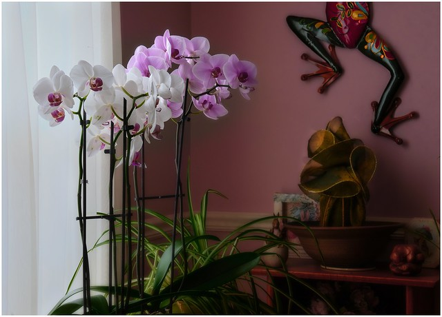 Orchids and