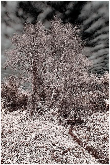 Árboles de ribera